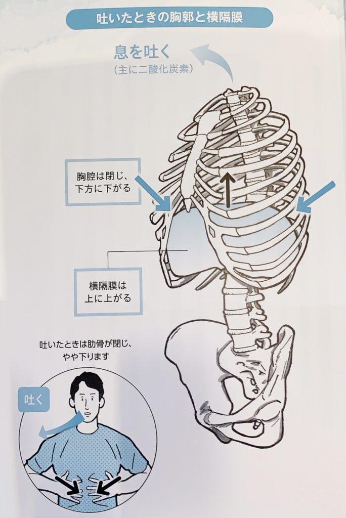 腹筋に力を入れるのは肋骨の動きが悪い