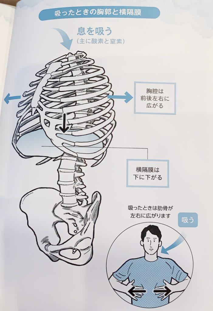 腹筋に力を入れるのは肋骨の動き